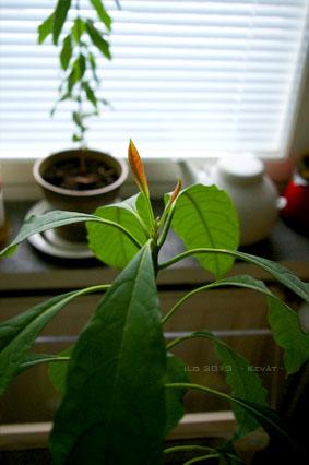 spring_2103_avocado.jpg